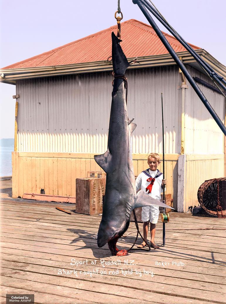 Shark caught at Russell, ca 1915 by marinamaral
