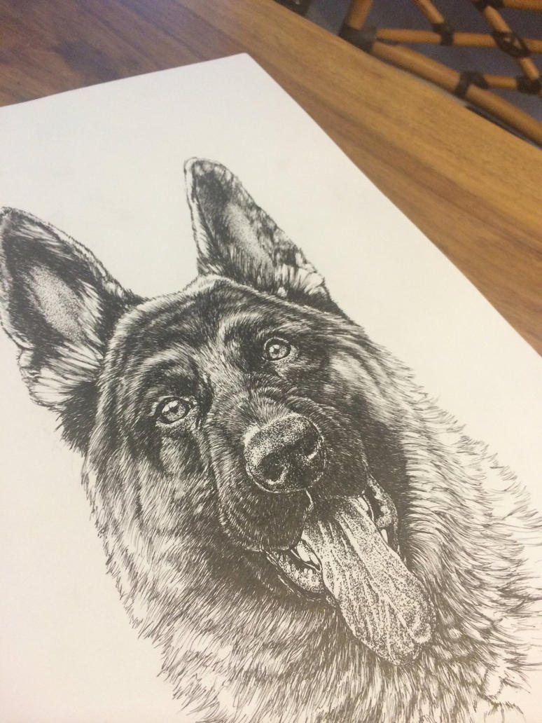 Finished German Shepherd commission by BuchmansStudios