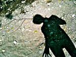 Shadow BeeCreek