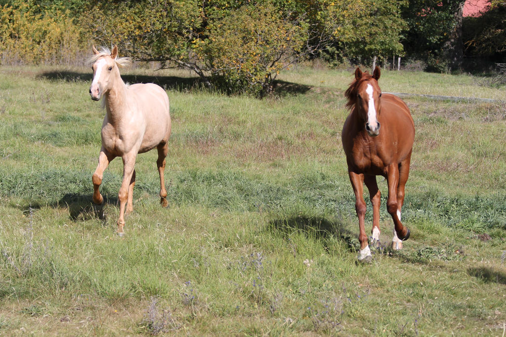 Palomino and Chestnut Mare 6 by How-You-Remind-Me