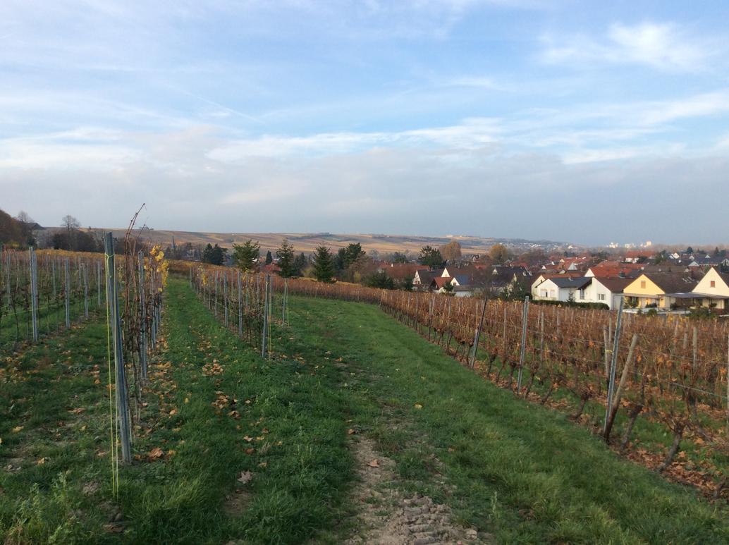 Vineyards by headstert