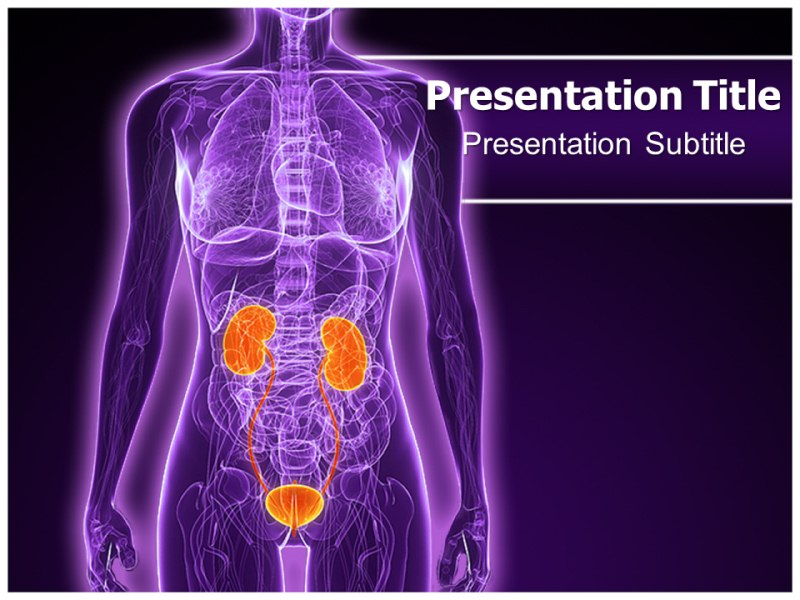 Specialists In Urology Powerpoint Template By Kaceysmith