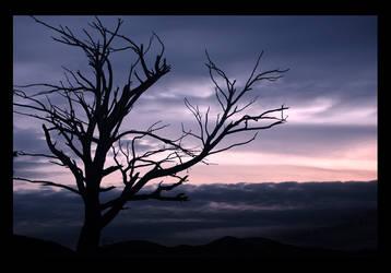 old tree by wldff06