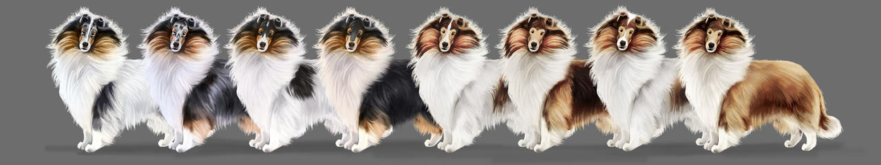 Collie Breed Art