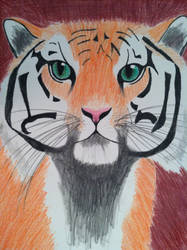 Tiger by Tigerwolf10