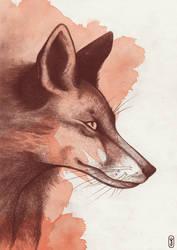 Red fox by joniina