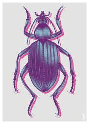 Coleoptera by joniina