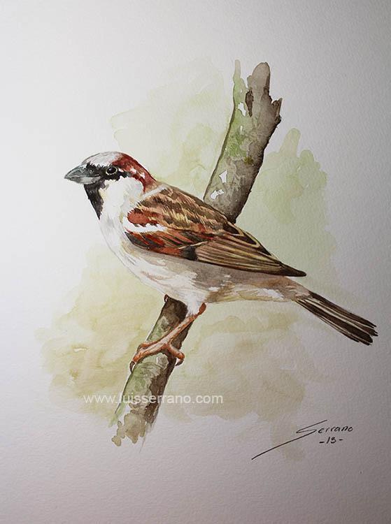 A little sparrow by legserrano
