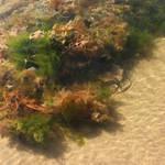 Seaweed by Selus