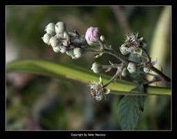 Garden Stuff 4 by Selus
