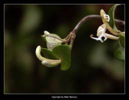 Garden Stuff 5 by Selus