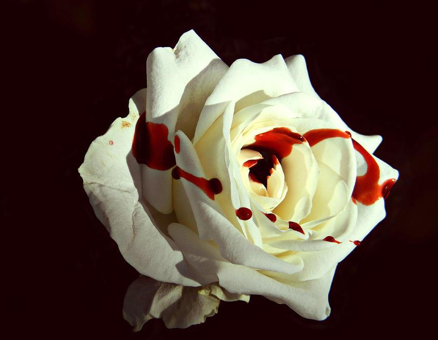 {President Snow's Rose} by SirNearlyHeadless on DeviantArt