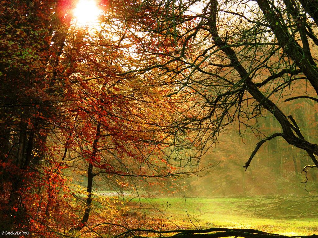 Autumn Forest by BeckyLaRou