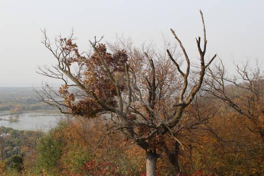 Stark Autumn Tree
