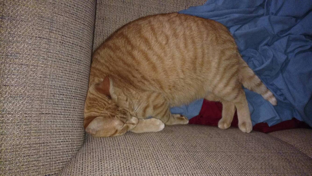 Real Life Garfield By Callalily000 On Deviantart