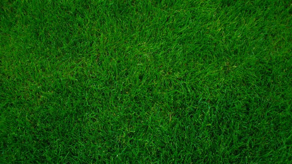 File Name  Grass