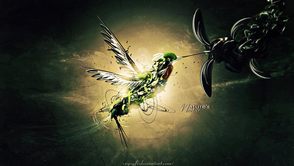 Hummingbird C4d Wallpaper by CryoGfx