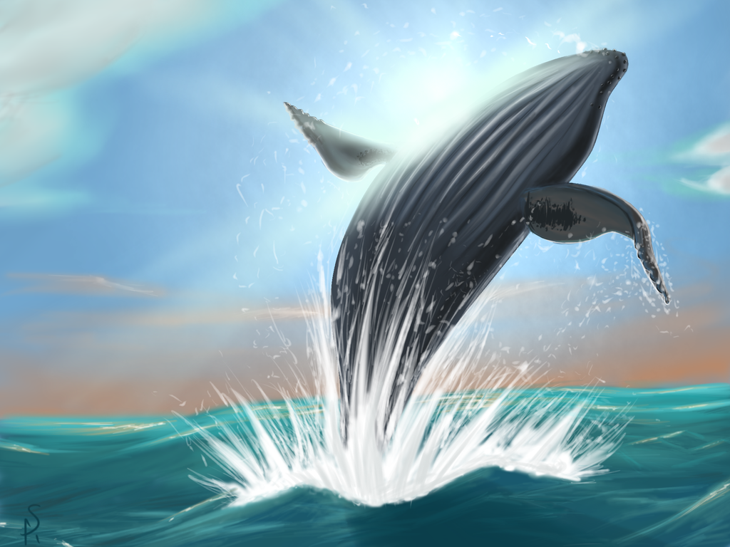Humpback Whale jumping out of water by Scorch-Art on ...