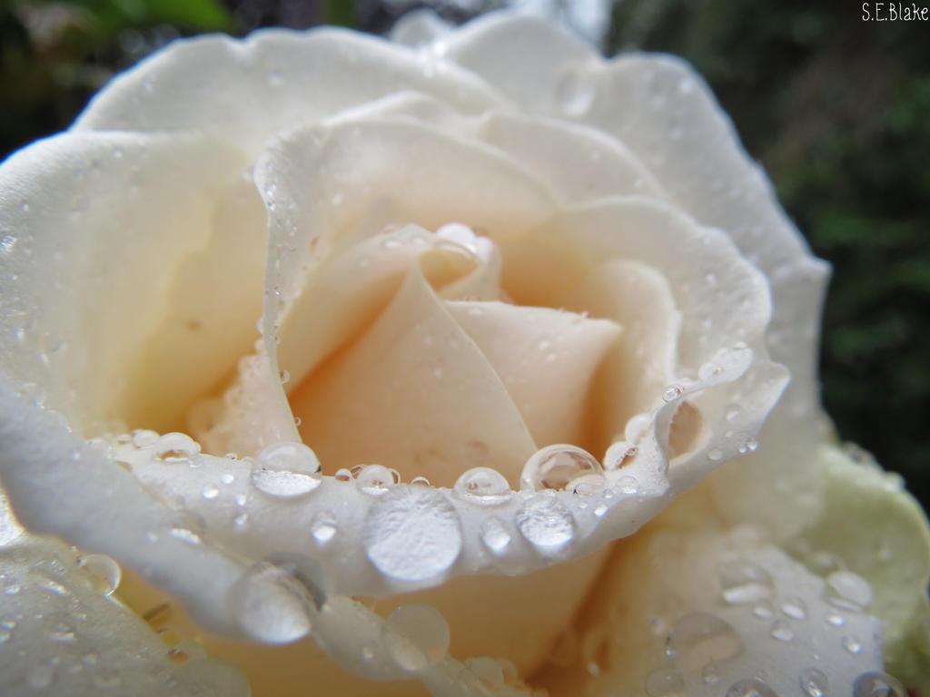 Raindrops by kiwipics
