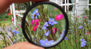 through the eye of a photographer
