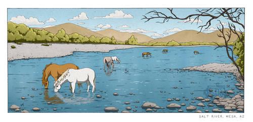 Wild Horses in the Salt River