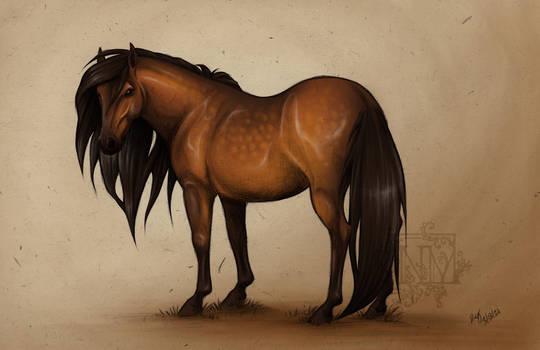 Horse Sketch_Dapple