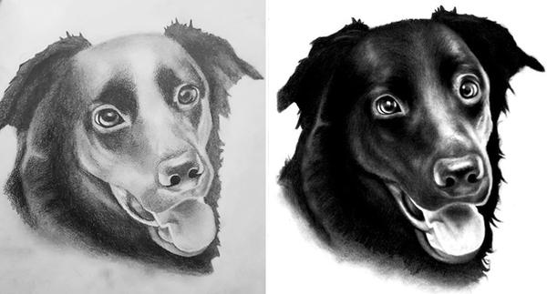 Dog drawing - Before after by ProfessorPicasso