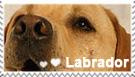 Labrador stamp by dark-cayden