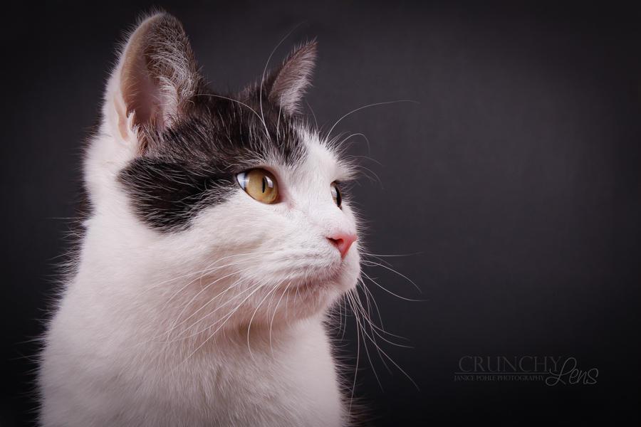 cat profile by dark-cayden