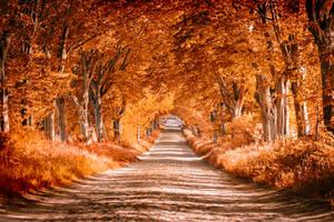 orange avenue by dark-cayden