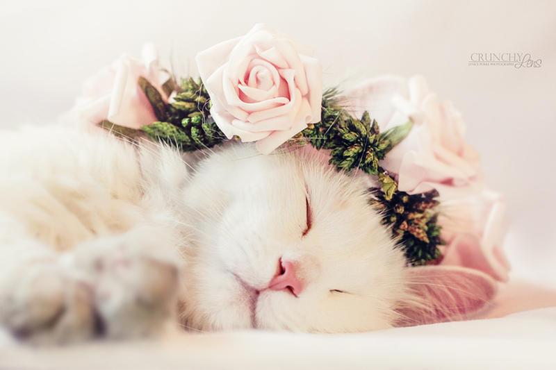 sleeping beauty by dark-cayden