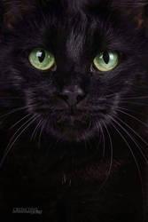 black cat by dark-cayden