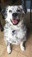 My Dog Ben!