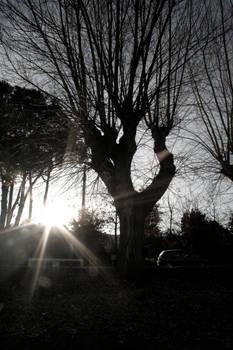 Let the sunshine 2