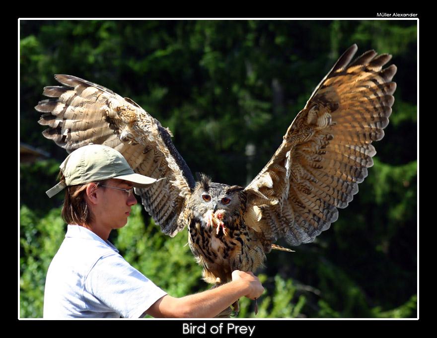 Bird_of_Prey_by_UnUnPentium115.jpg
