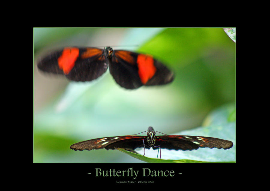 Butterfly Dance by UnUnPentium115