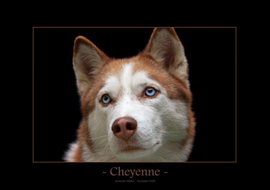 Cheyenne II by UnUnPentium115