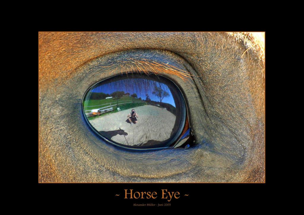 Horse Eye by UnUnPentium115