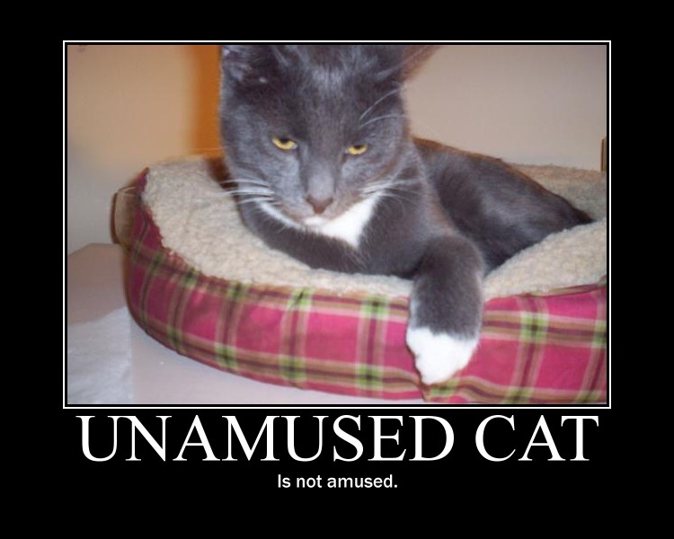 Unamused Cat... by Zagnagma