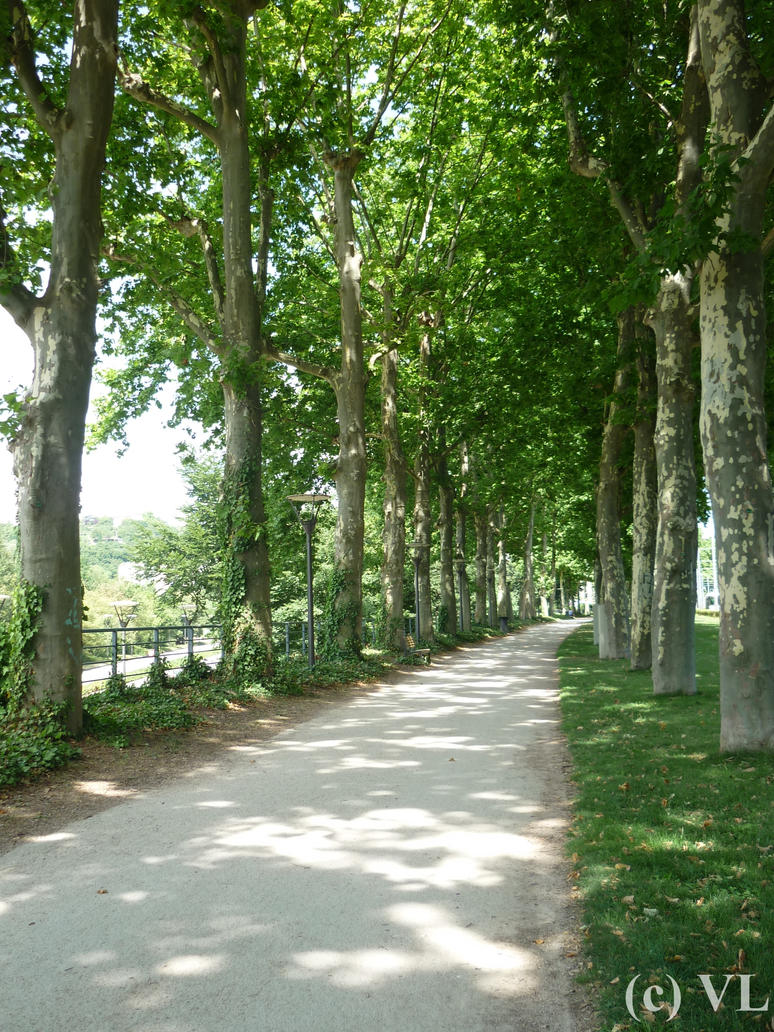Le long chemin vert | The green long track by NuitNuit01