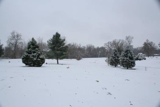 Christmas tree stock