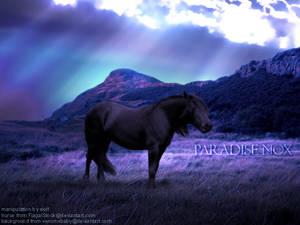 Paradise Nox