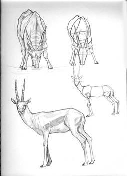 animal study 3