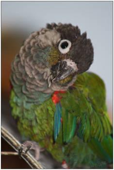 Purdy Birdy
