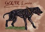 Lucio portrait by xBlankiez