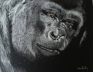 Gorilla in charcoal