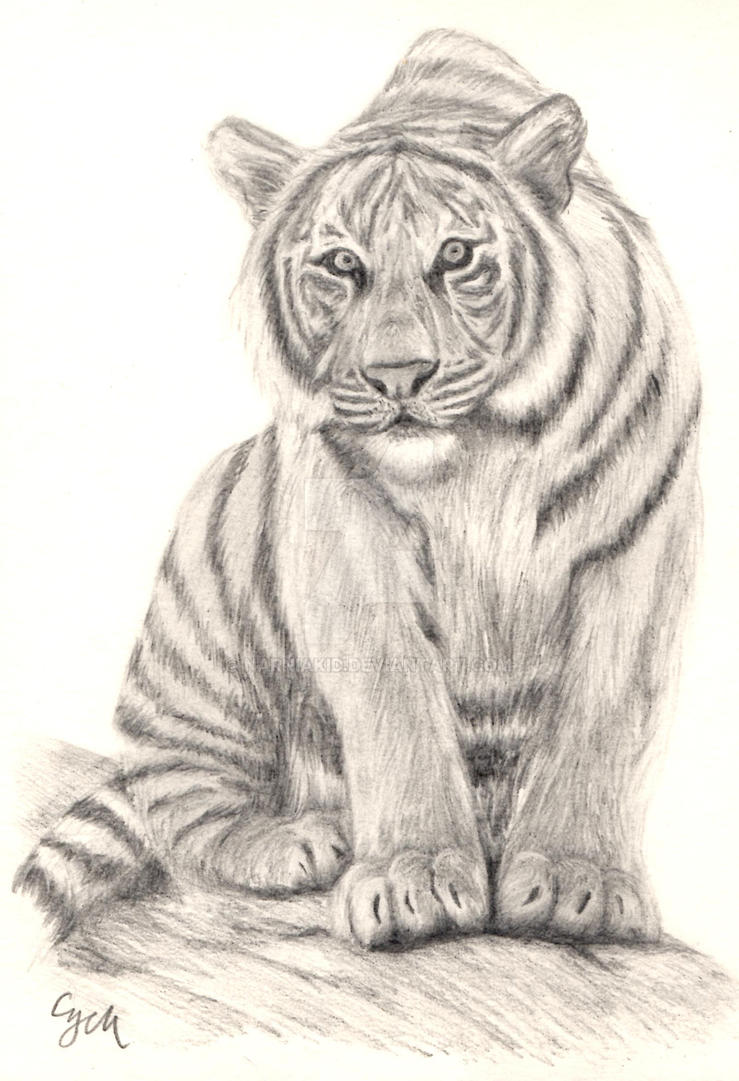 Tiger Sketch by Narniakid