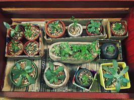 Succulent-20160928