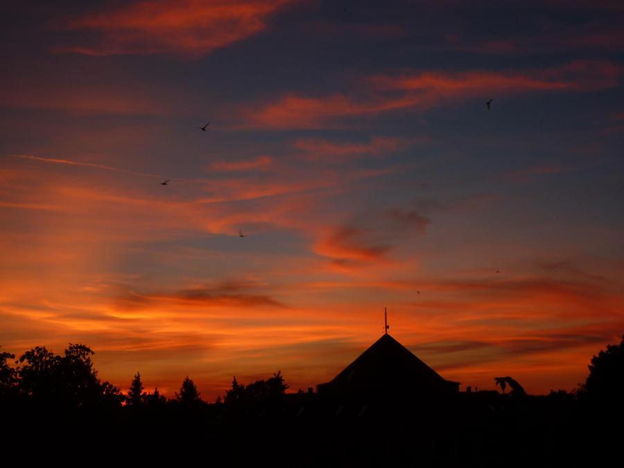Birds in the sky by Noirro