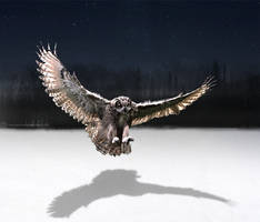 Owl Shadow